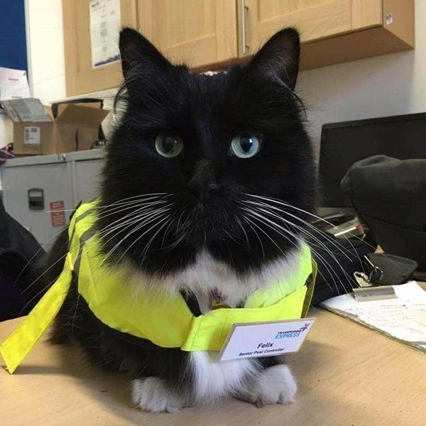 Kediler Candır! Felix'in Hikayesine Bayılacaksınız